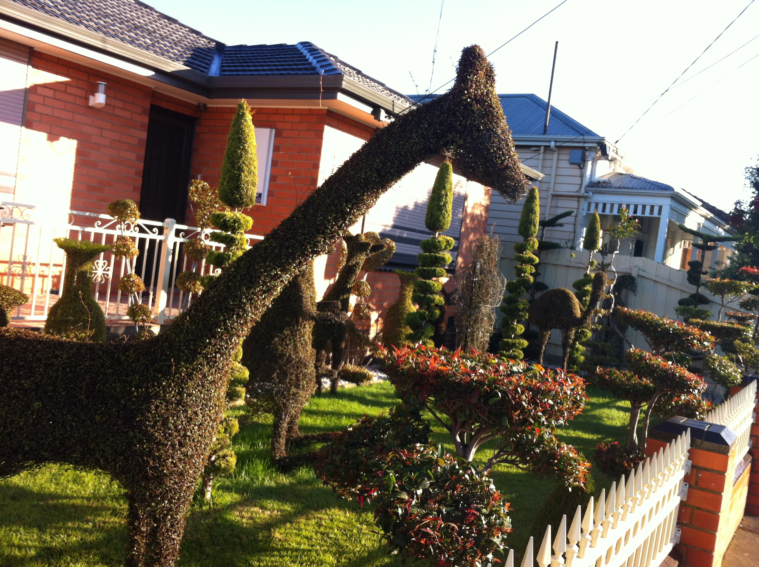 Topiary | Andie\'s World